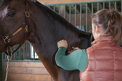 Adequan Equine veterinarian giving horse injection